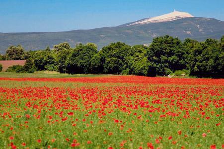 Landscape around us - Mont ventoux