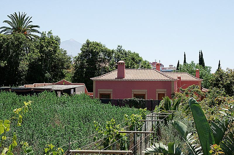 View of farm, casa Laurel and Teide