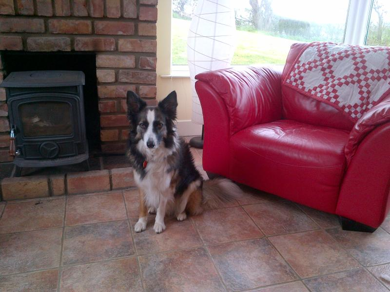 Collie Kim says 'Pets Welcome - I'll watch the cat-flap!'