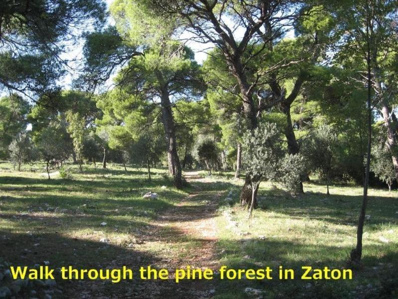 Caminar por el bosque de pinos en Zaton