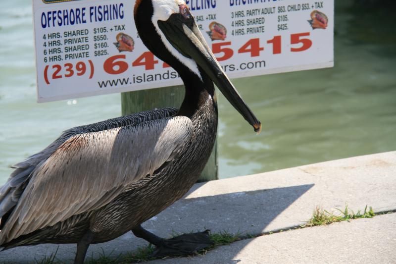 Votre voyage de pêche en haute mer commence à Rose Marina juste 5 min de la maison. L'oiseau est réel