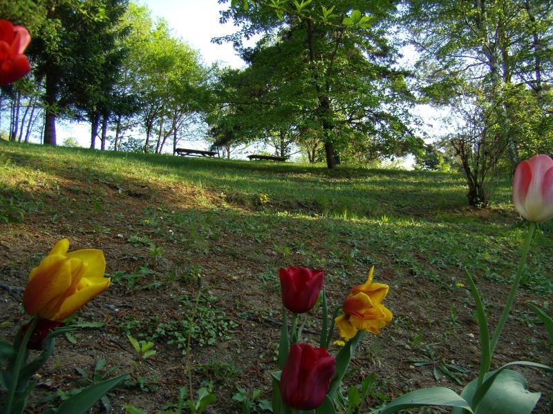 Springtime at Les Iris