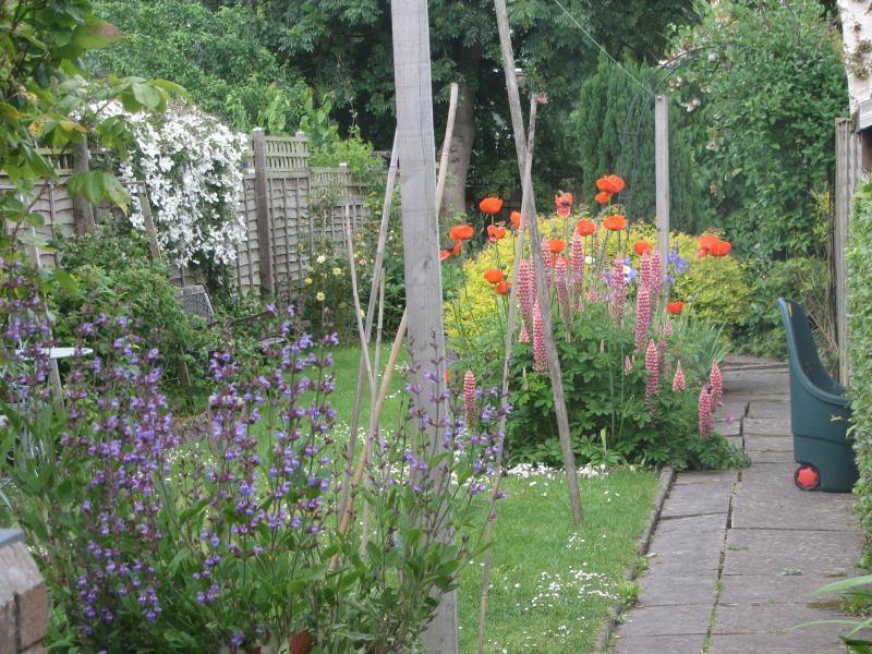 Garden from washing line