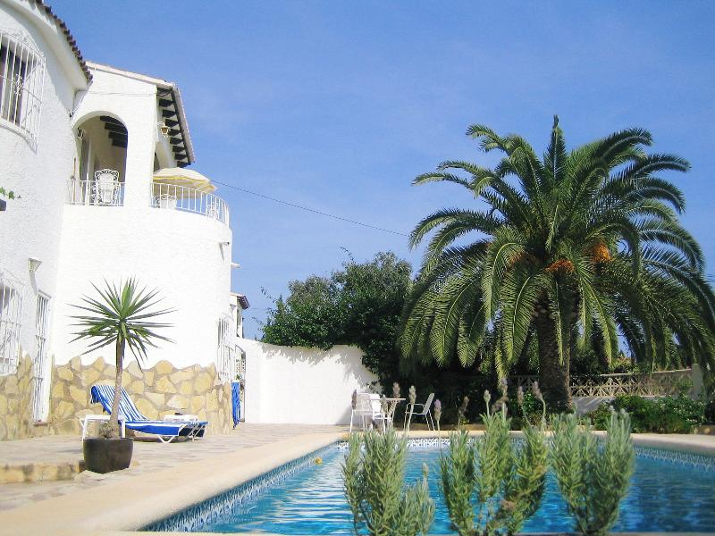 Pool, Terrace, Palm Tree and House