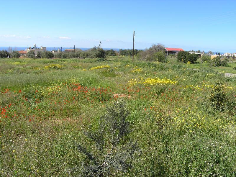Fields in Springtime