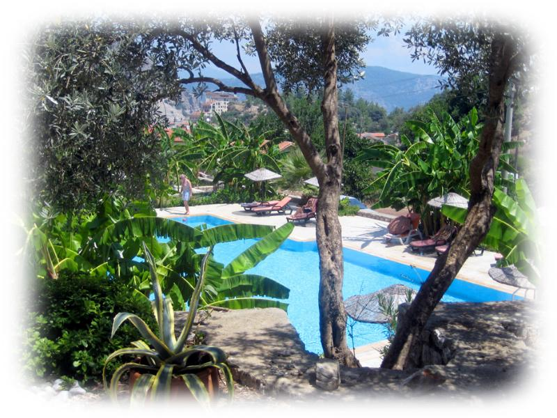 Olive Grove Pine Valley Apartment, holiday rental in Turunc