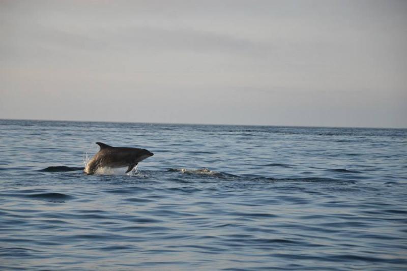 Malin Head delfini giugno 2014