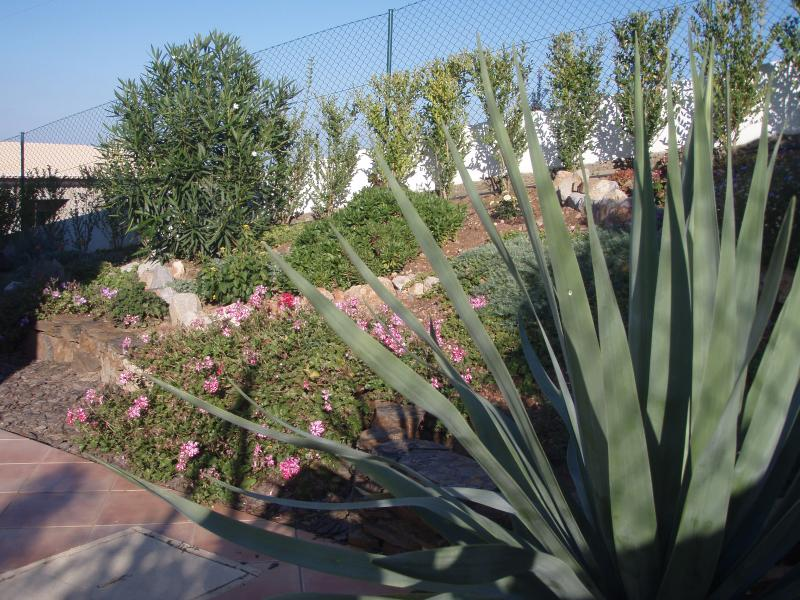 Jardin à l'arrière de la villa à l'extérieur des chambres à coucher