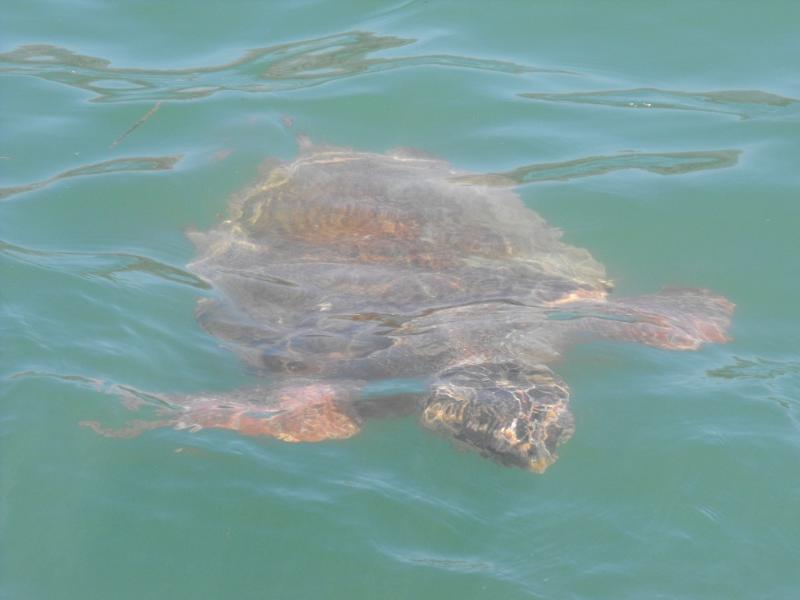 This is a must see, the turtles at Argostoli Bay