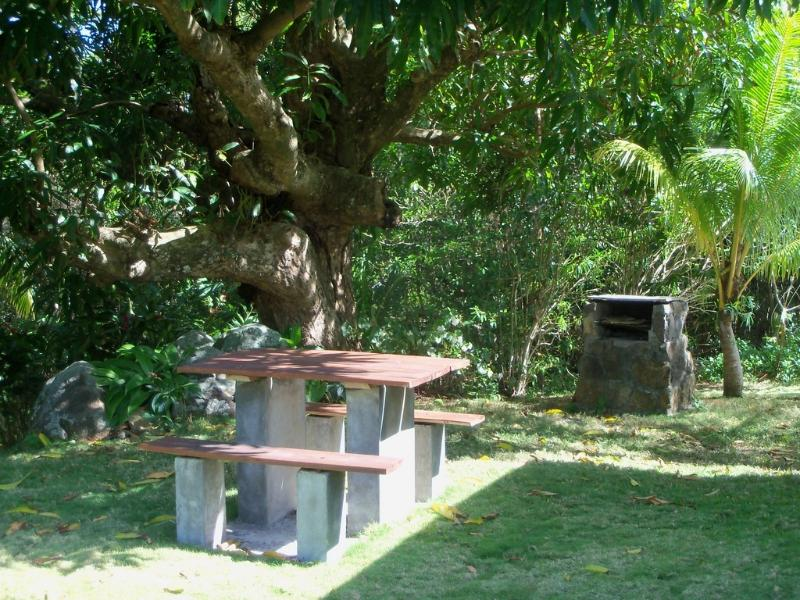picnic area at the back of the house under the old mango tree