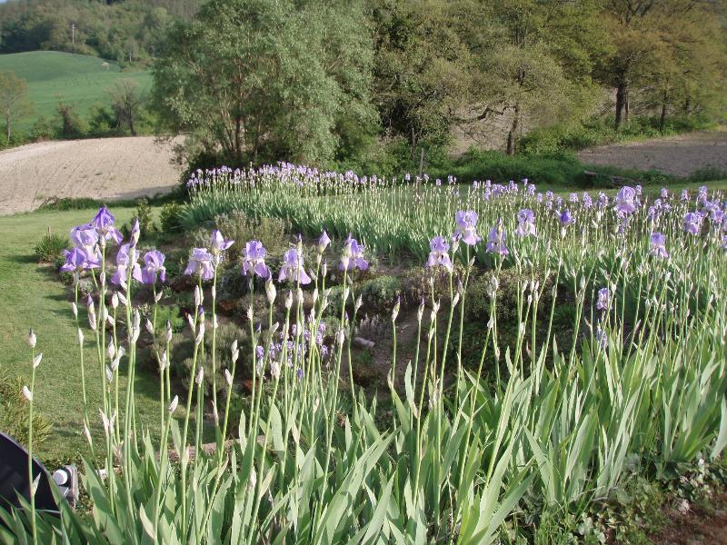herb garden for your convenient