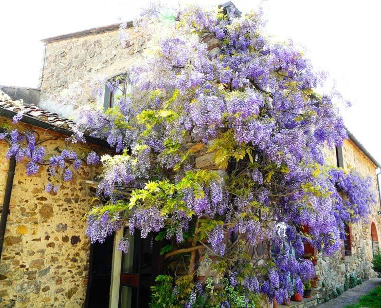 Villa Patrignone 7 bedroom Tuscany villa with pool, holiday rental in Isole