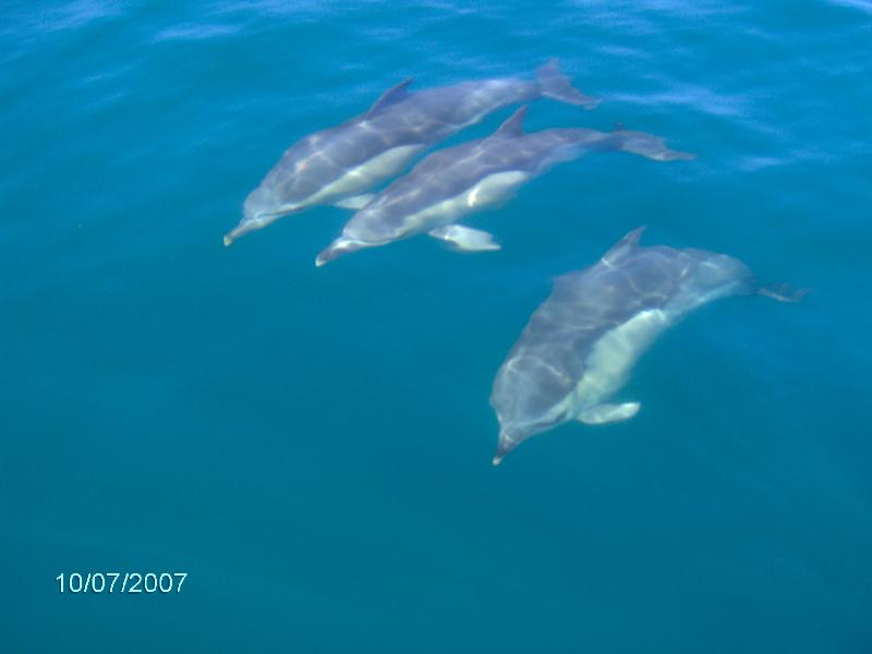 As seen on Dolphin watching trip. These are available daily from the marina.