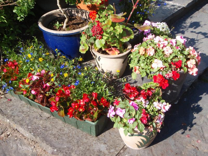Annuals in pots and planters renewed each year in first week in June.