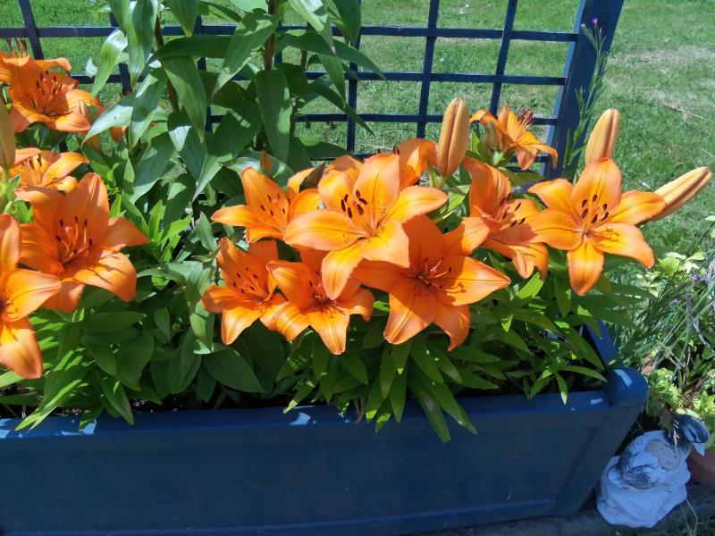 una delle 3 depressioni con bella lillies