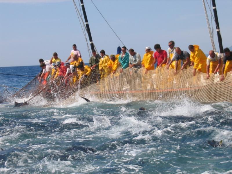 Tuna fishing - Pesca del tonno