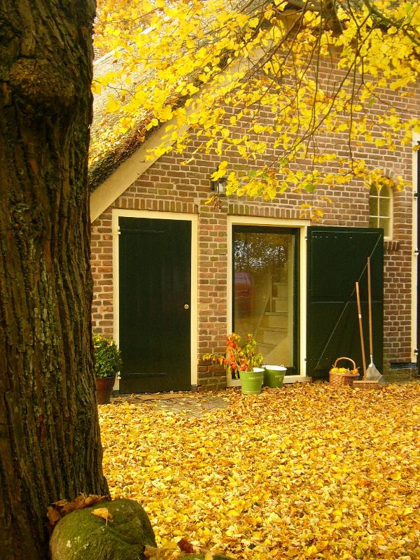 The entrance of the apartment.In autumn the lindentree gives a bed of yellow leaves.