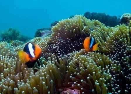 Divers Paradise Red Sea