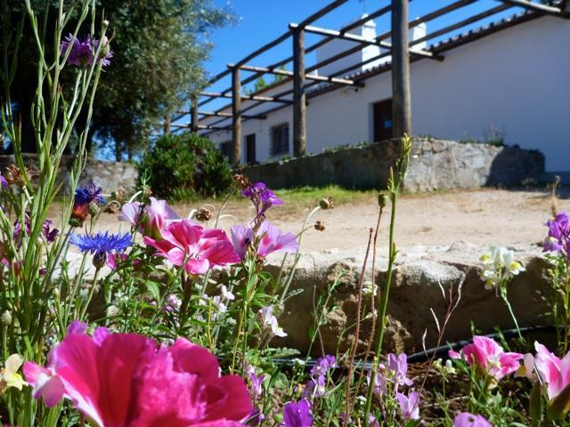 RELAXING GETAWAY, vacation rental in Albergaria dos Fusos
