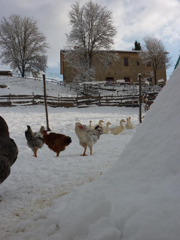animals of the farm