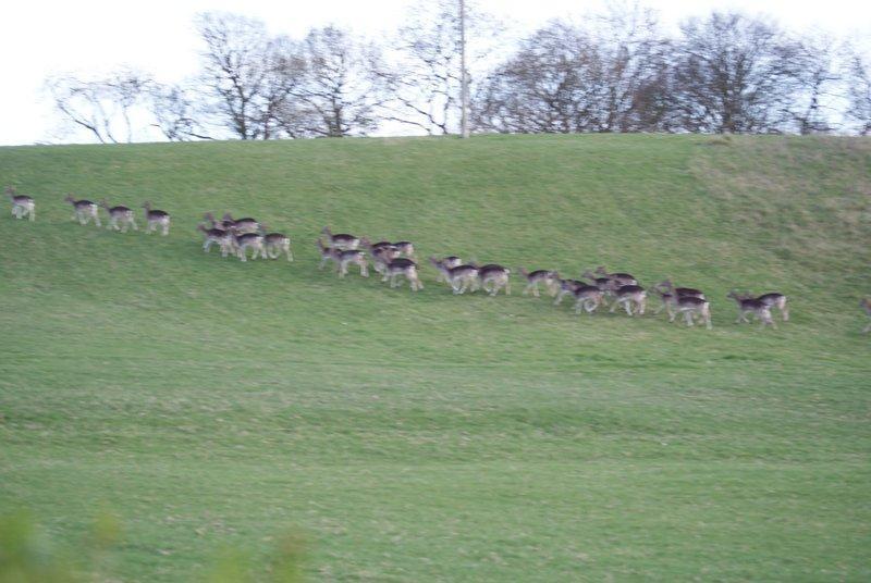 See the deer on the adjacent Ragley Hall Estate