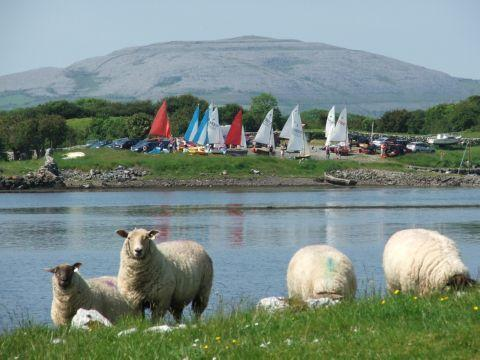 Sailboats and Sheep!