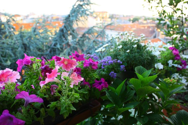 il melograno residence, holiday rental in Lucca