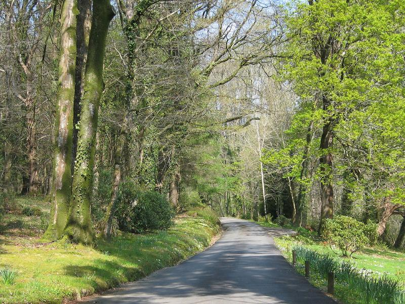 The approach to Holne Chase through deciduous woodland