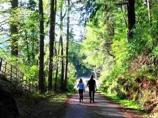 Walk to Benmore Gardens
