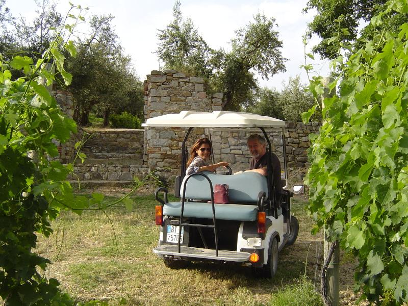 Enjoy our free weekly tour of an ancient vineyard, visit the Cantina and savor wines and olive oil.