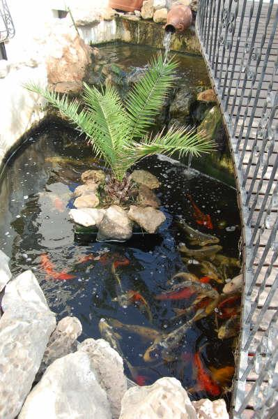 Lago com peixes Koy