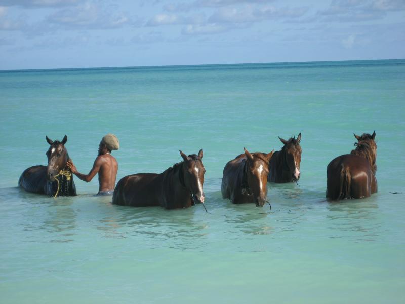 Horses take a bath before work