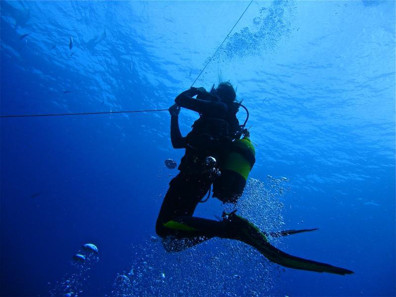 immersioni con dive club tenerife