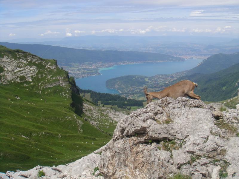Petite balade à la Tournette et vue du Lac d'Annecy