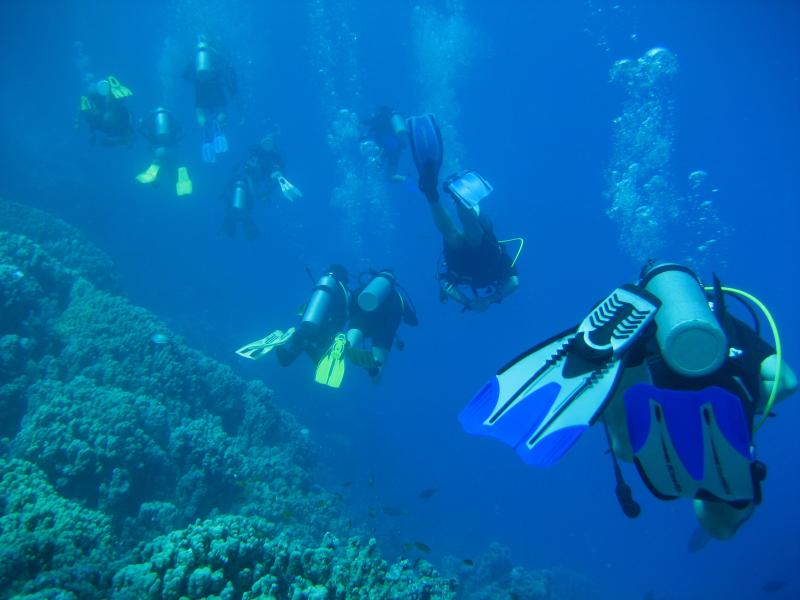 Diving on Ras Um Sidd.Just ask for dive company recommendations,we have been diving Sharm for  years