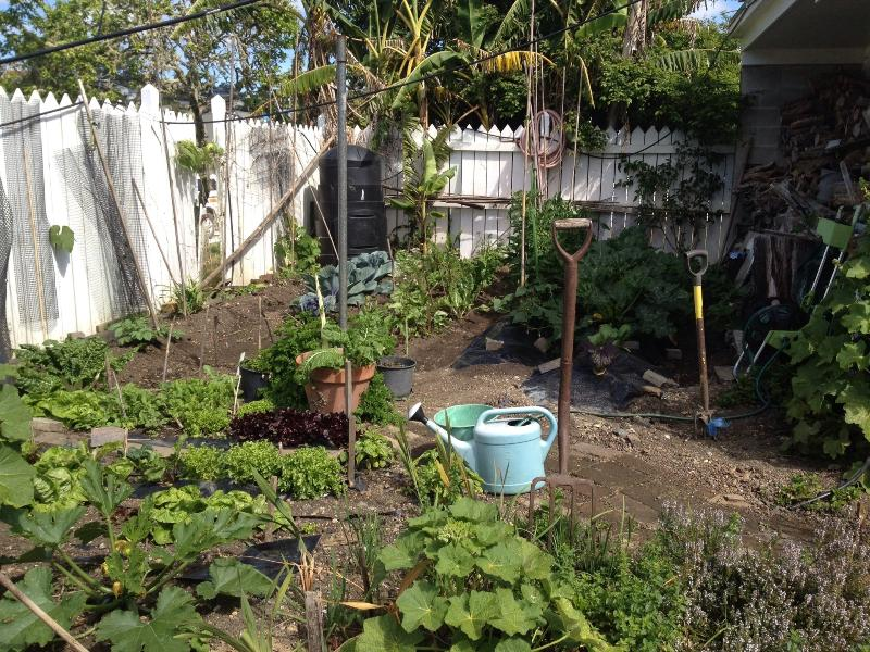 Veggie garden available to guests. Spray free