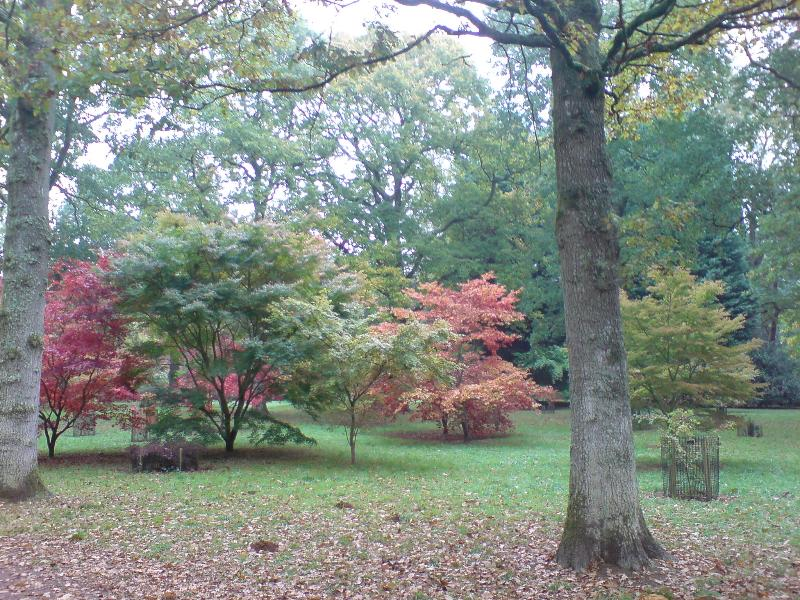 Visit in Autumn for the best time to visit the Arboretum