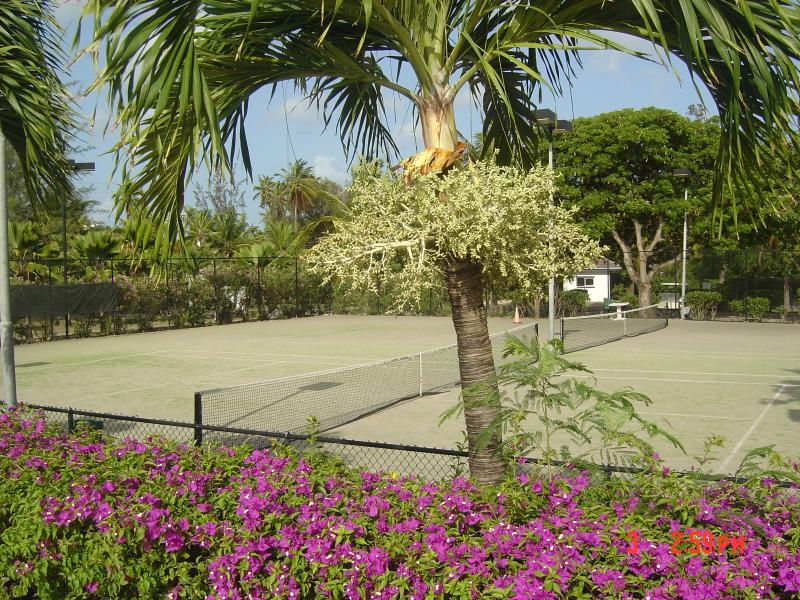 Have a game of Tennis at jolly Harbour