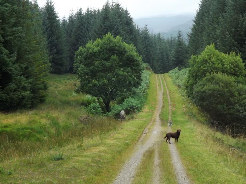 Acharn Forest - View along the No7 Sustrans Cycle Trail - a short distance from the cottage.