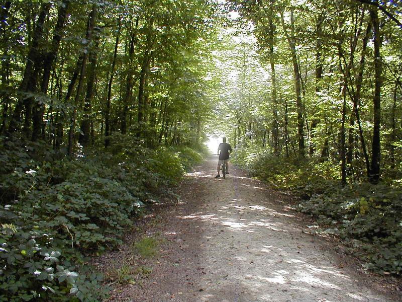Coetquen Forest adjoining cottage
