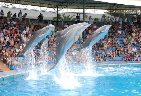 ZOO MARINE DOLPHIN SHOW AND SWIMMING WITH DOLPHINS