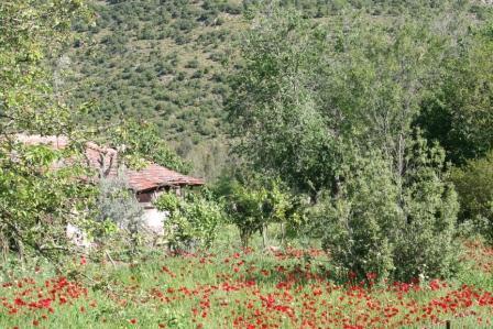 Spring Flowers In Kinali