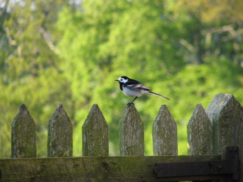 Wildlife on the doorstep!