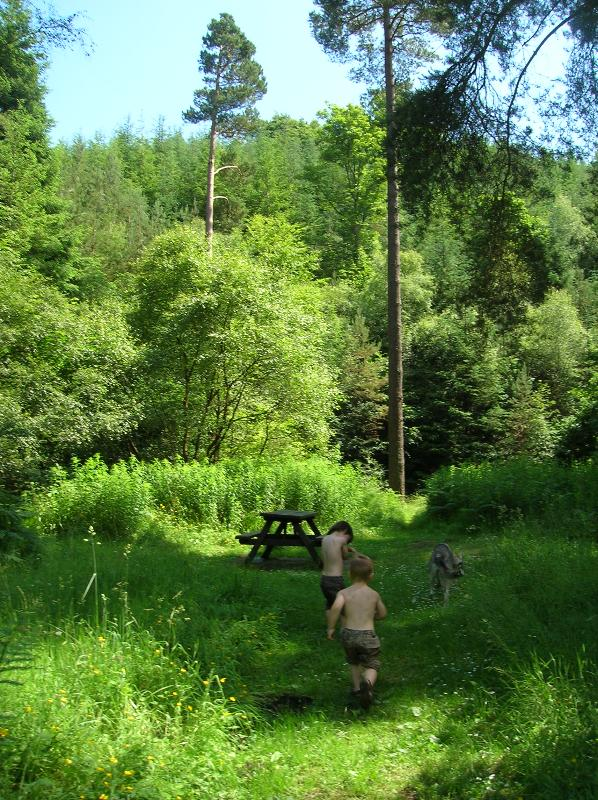 One of the Forest Walks along the River Tweed