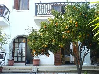 Lemon Tree House with free car, holiday rental in Pissouri