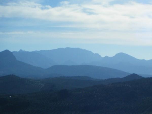 Local views (from El Tapir)