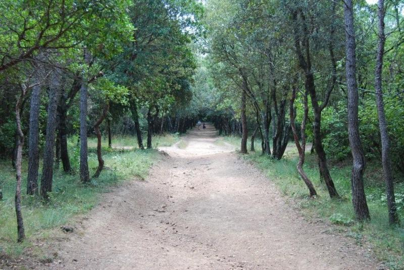 The enchanting walk through the woods for lunch