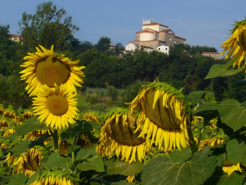 Sunflowers and the Church