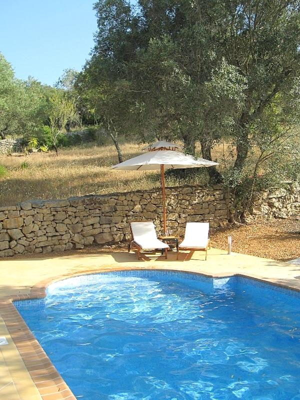 Pool and our land in the Olive Plot behind