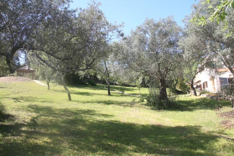 The Chill Out Zone in the Olive Grove